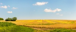 Panoramic view of farmland field edge with yellow ripe wheat plantation and green grasses and trees near it.