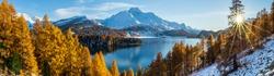 Panoramic view of Lake Sils in Switzerland during golden autumn season.