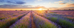 Panoramic view of lavender filed in Valensole. Provence, France