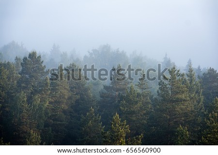 panoramic view of misty forest at majestic sunrise over trees. far horizon with light rays and lens flare effect #656560900