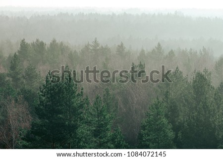 panoramic view of misty forest. far horizon. #1084072145