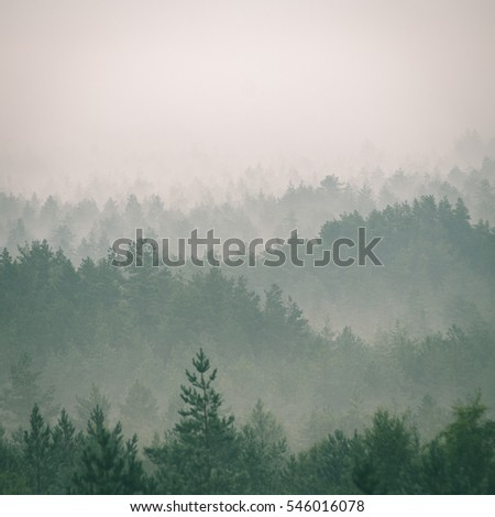 panoramic view of misty forest. ...