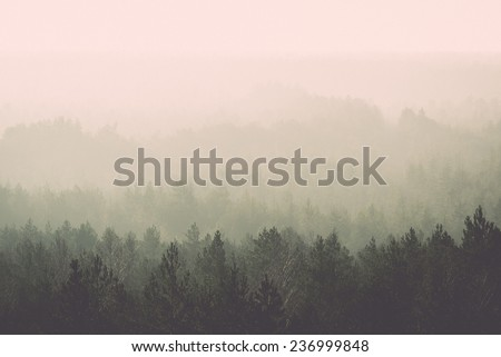 panoramic view of misty forest. far horizon. - retro, vintage style look