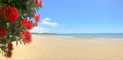 Panoramic view of Pohutukawa red flowers blossom on the month of December in doubtless bay New Zealand. No people. Copy space