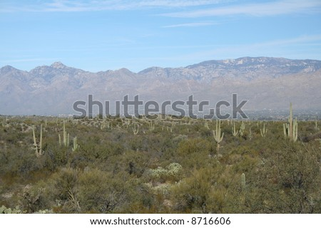 Panoramic view of Saguaro National Park with the Rincon Mountains, Sonoran Desert, Tucson, Arizona