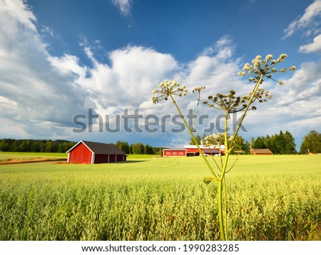 Panoramic view of the agricultural field, forest, wooden warehouse. Sweden. Traditional scandinavian architecture, falu red dye. Dramatic cloudscape. Idyllic rural scene. Farm, alternative production Stock fotó ©