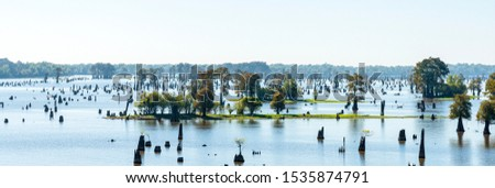 Panoramic View of the Bayous in Louisiana in the Morning, USA