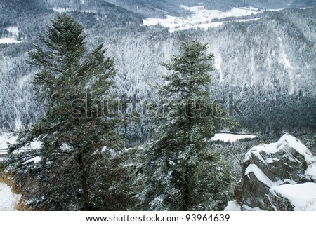 panoramic view of the black forest in winter
