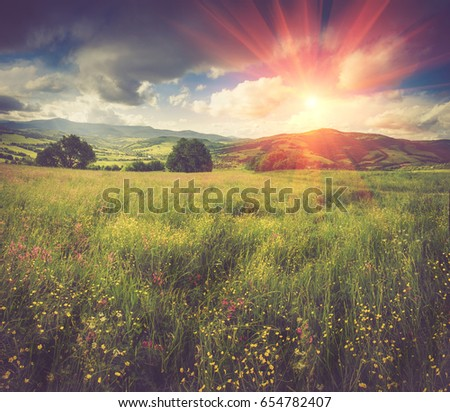 Panoramic view of the blooming flowers, summer meadow in the mountains and blue cloudy sky. Alpine seasons, natural background.Filtered image:cross processed vintage effect. #654782407