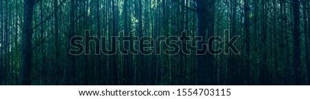 Panoramic view of the dark gloomy old forest in autumn