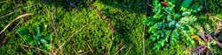 Panoramic view of the forest litter macro