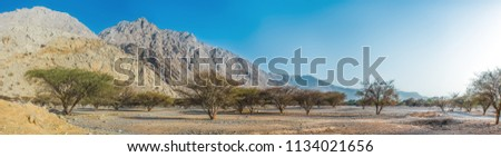 Panoramic view of the mountainous terrain in the desert with a green valley, RAK, UAE, Jun.2018 #1134021656