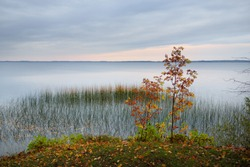 Panoramic view of the Razna lake at sunset, forest in the background. Golden trees close-up. Symmetry reflections on the water, natural mirror. Idyllic autumn landscape. Nature of Latgale, Latvia