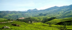 Panoramic view of the vehicles traveling on the road through the lush green tea fields on the hills of Munnar Kerala India