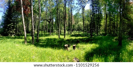 Panoramic view of the woods with lush grass #1101529256