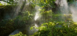 Panoramic view of Tropical jungle with river and sun beam and foggy in the garden