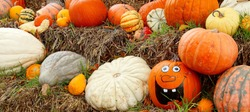 panoramic view of various Pumpkins and with an Happy Halloween Face Pumpkin in Straw. Decoration of Ripe Autumn Vegetables. Creative Decorating with Gourds in Fall.