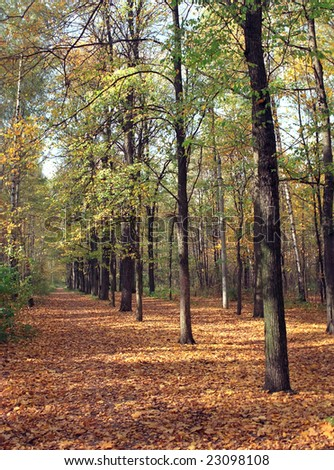 Panoramic view on forest in fall time