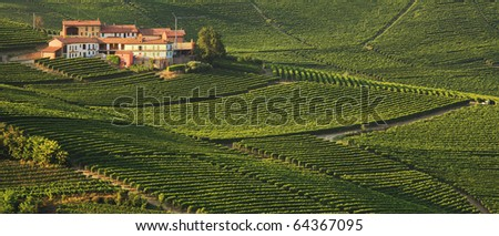 Panoramic view on rural house among vineyards in Piedmont, Italy.