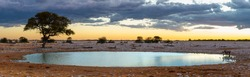 Panoramic view on the Okaukuejo waterhole in the Etosha national park in Namibia. On the right side there is a rhino drinking at the waterhole.