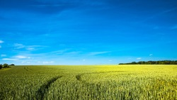 Panoramic view over beautiful farm landscape of wheat crops in late Spring with deep blue sky at sunny day with light and shadow interplay