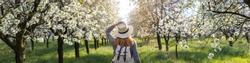 Panoramic view to woman in blooming orchard at spring. Panorama of cherry orchard. Hiking woman with straw hat and backpack enjoying springtime in nature