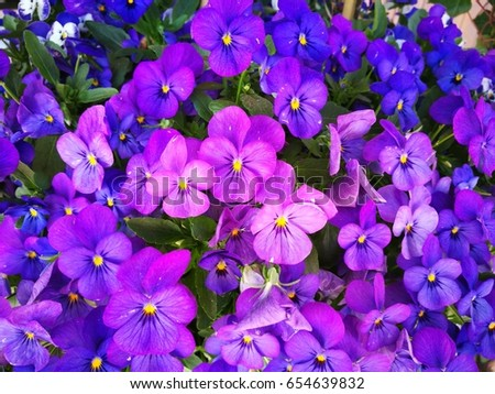 Free photos purple flower with yellow center avopix pansies purple flower with yellow center 654639832 mightylinksfo