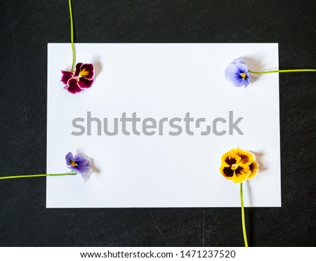 Pansy Flower with Blank Paper Page for Greeting Message. Multicolor Bright Flowers on Dark Background. Top view, Flat lay, Copy Space