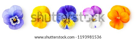 Pansy flowers or spring garden viola tricolor collection isolated on white background. Flower arrangement and floral design. Top view, flat lay banner  Сток-фото ©