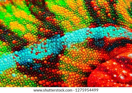 Panther chameleon skin close up. This is an ambilobe locale, and shows amazing green, yellow, red, orange, blue, and white stock photo