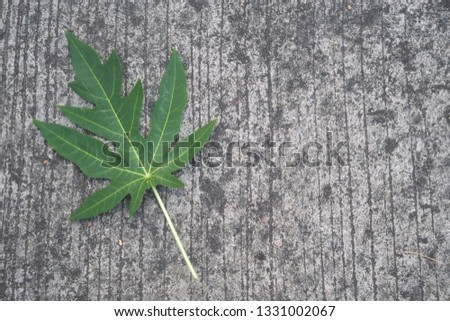 Papaya leaves on the cement floor, cement background, road cement #1331002067