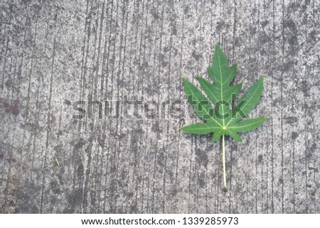 Papaya leaves on the cement floor, cement background, road cement #1339285973