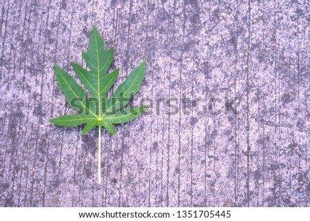 Papaya leaves on the cement floor, cement background, road cement #1351705445