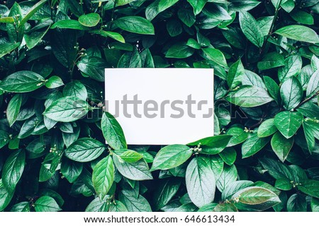 Paper Card Mockup on a Green Leaves - Shutterstock ID 646613434