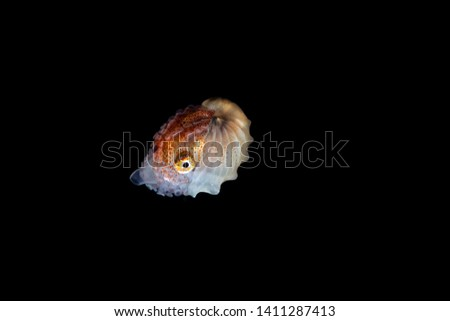 Paper nautilus, Argonauta argo, the argonauts (genus Argonauta, the only extant genus in the family Argonautidae) are a group of pelagic octopuses