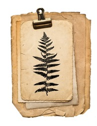 Paper sheets with clip isolated on white background. Fern plant drawing