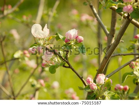 paper textures with apple Blossom