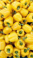 Paprika. Yellow pepper. Sweet bell peppers, top veiw photo of Yellow pepper for background texture