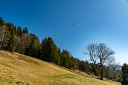 Para-glider over the wooded slope of the mountains from the great valley of Walser. single tree and yellow and green meadows between forests and trees, under the blue cloudless sky from Vorarlberg