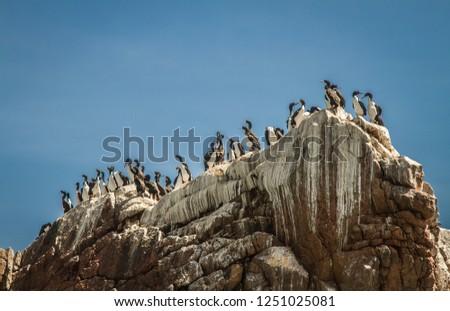 Paracas National Reserve, Ica - Peru #1251025081