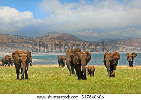 stock-photo-parade-of-elephants-walking-