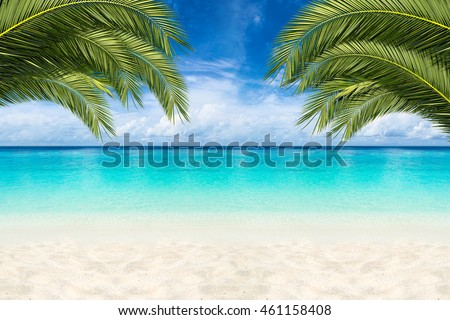 paradise beach background with coco palms #461158408