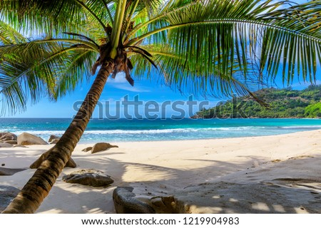 Paradise beach. Sunny beach with palm and turquoise sea.  Summer vacation and tropical beach concept.