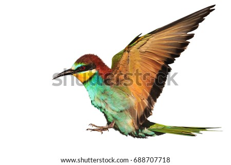 paradise bird in flight is isolated on white ,creativity, symbols and signs #688707718