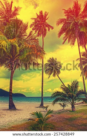 Paradise nature, palm tree on the tropical beach. Summer travel background with retro vintage instagram filter. #257428849