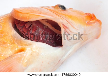Paralyzed fish gills in the fish's mouth Stockfoto ©