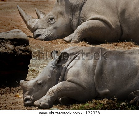 parent rhino and baby