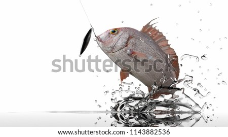 Pargus Red Snaper jumping for jig bait lure white background 3d rendering