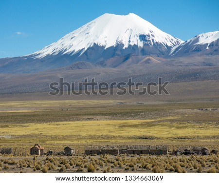 Parinacota volcano. High Andean tundra landscape in the mountains of the Andes. The weather Andean Highlands Puna grassland ecoregion, of the montane grasslands and shrublands biome. #1334663069