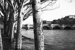 Paris, France. Plane trees row in high water of Seine river in winter.  Flooded embankment in evening golden sunlight rays. Seasonal landscape. Natural beauty background. Black and white photo.